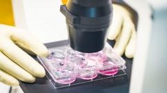 В России заявили об успешном завершении фазы клинических испытаний вакцины от COVID-19